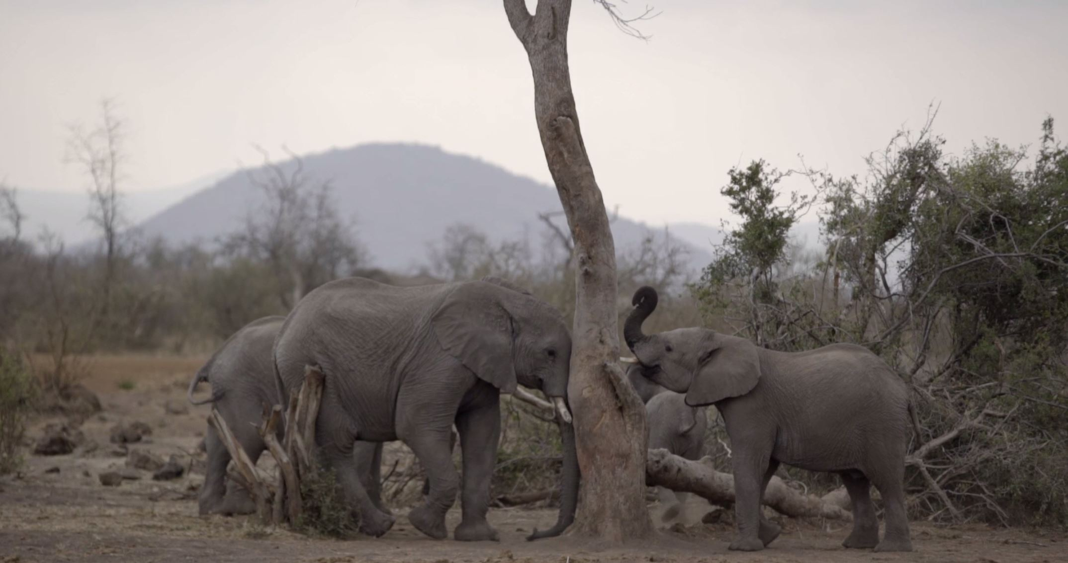 amazing elephant facts you need to know   united for wildlife